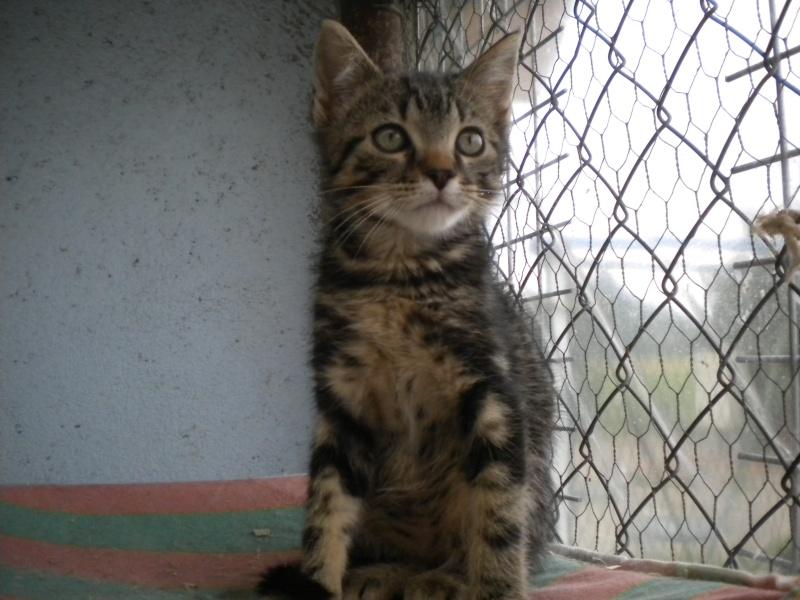 POPSY (chaton mâle tigré foncé) Sos_1_18