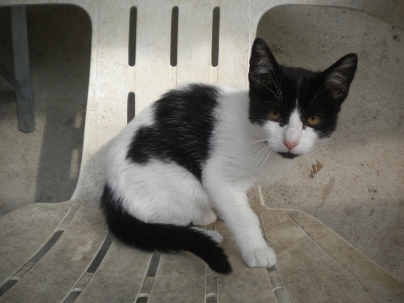 FELIX ( mâle blanc et noir) Sos_2411