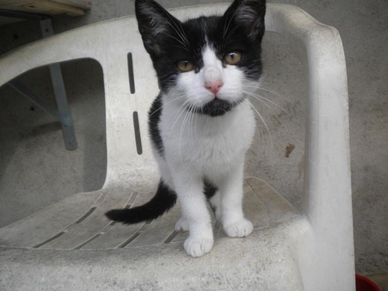 FELIX ( mâle blanc et noir) Sos_2511