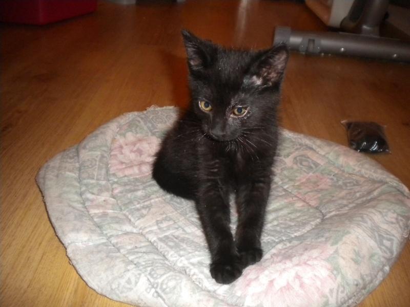 URANUS (chaton mâle noir) Réservé Sss_5612
