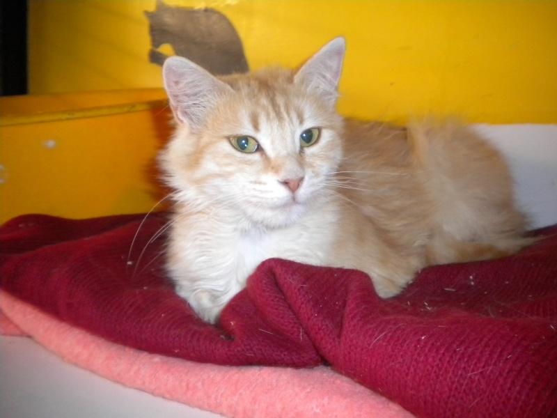 Miel (chatte angora beige) Sss_5711