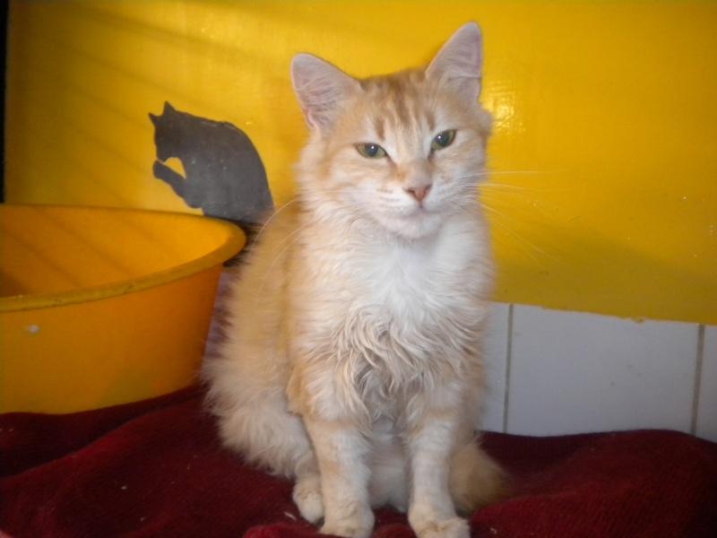 Miel (chatte angora beige) Sss_5712