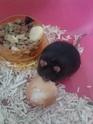 Rat petit, est ce une souris ? 20130811