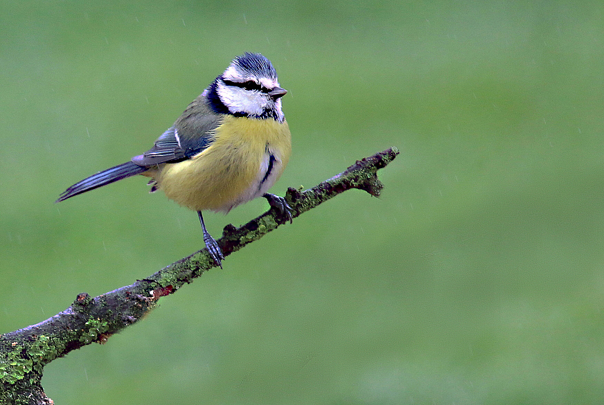 Mes oiseaux 15321210