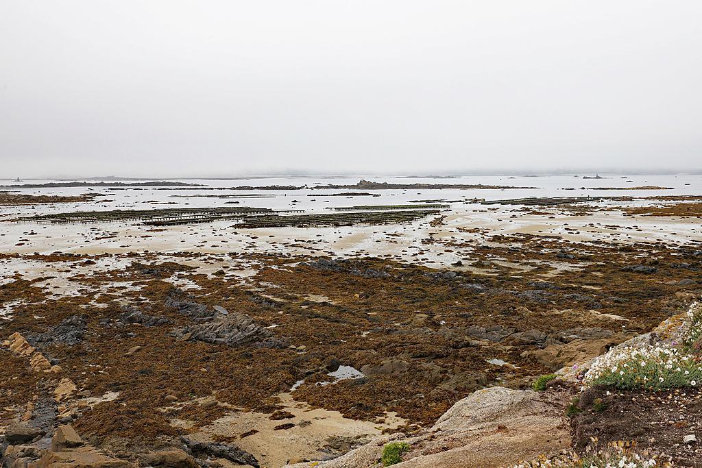 Ile Callot en Finistère 6d2_7923