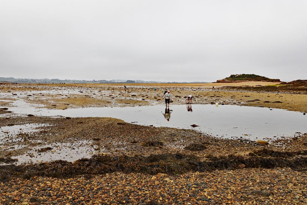 Ile Callot en Finistère 6d2_7929