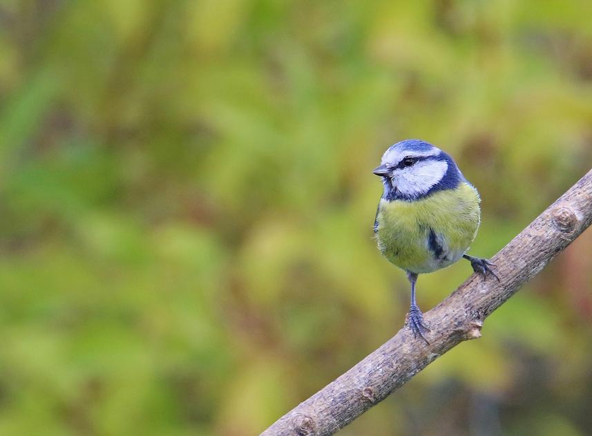 Oiseaux du jardin Re_7d213
