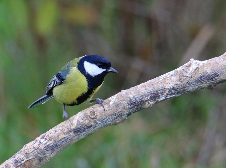 Oiseaux du jardin Re_7d214