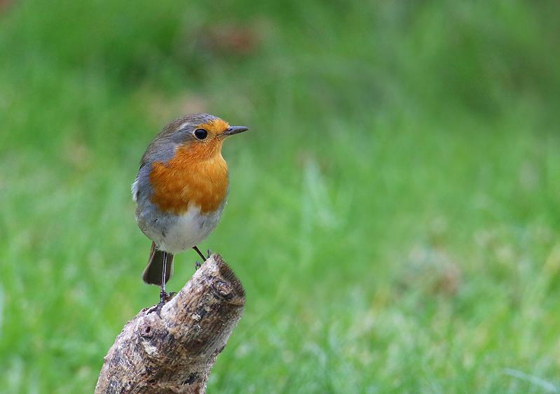 Oiseaux du jardin Re_7d215