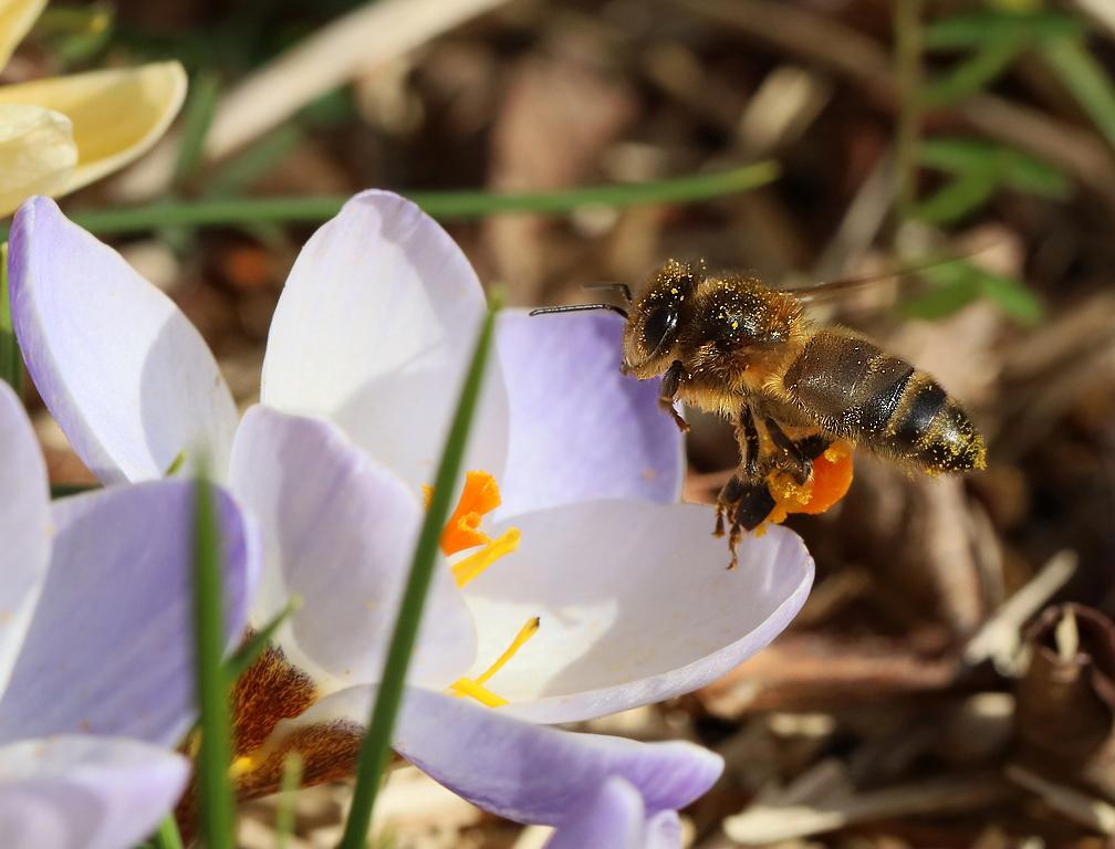 Premiers insectes de la saison Rp_05810