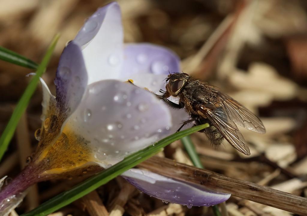 Premiers insectes de la saison Rp_06010