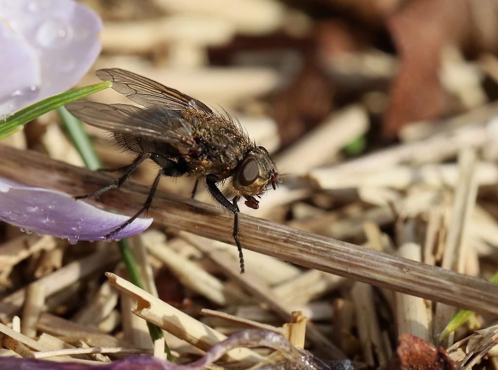 Premiers insectes de la saison Rp_06011