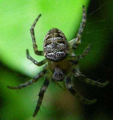 Images Grande Jungle Araign10