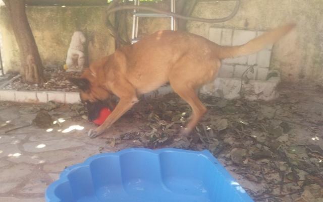 Un jouet pour chien, intéressant et INDESTRUCTIBLE! - Page 3 20140712