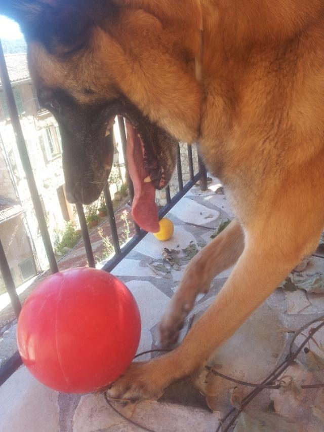 Un jouet pour chien, intéressant et INDESTRUCTIBLE! - Page 3 20140713