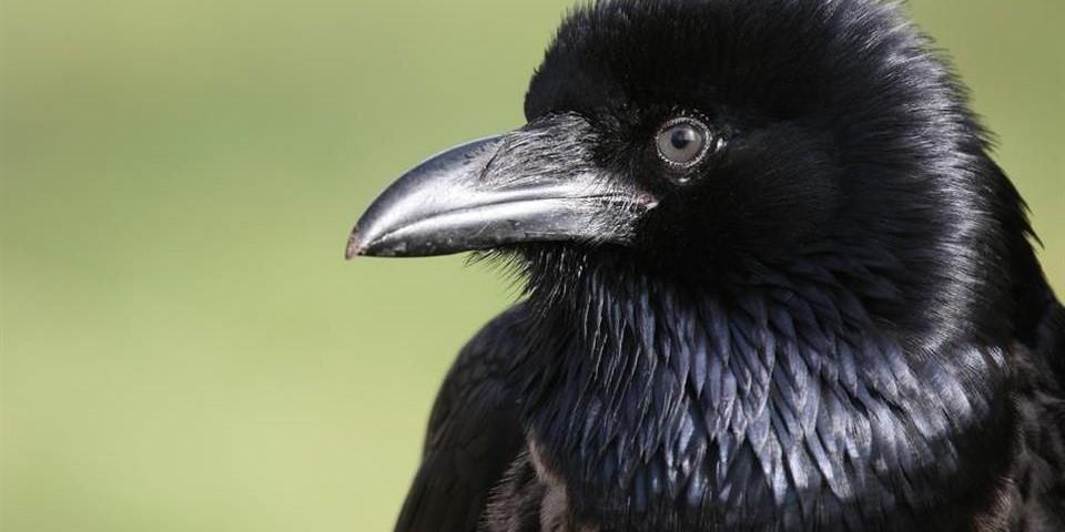 A inteligencia dos Pássaros  36816210