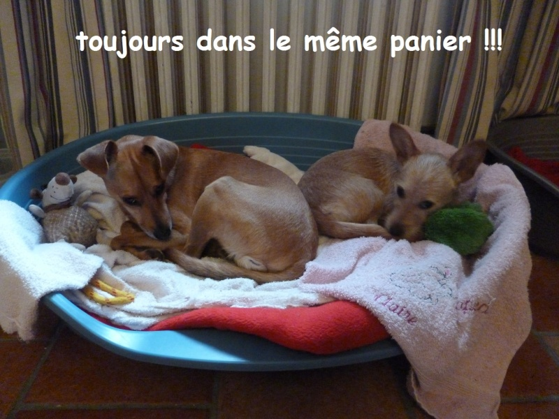 HAPPY (Tartine) et HELLO  - Page 10 Panier12