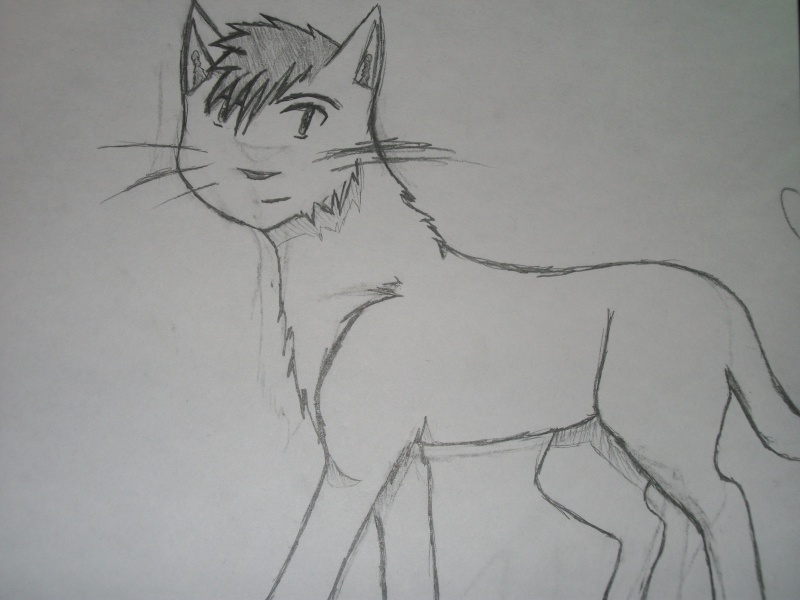 CarlyBoo Cat Commish Drawin11