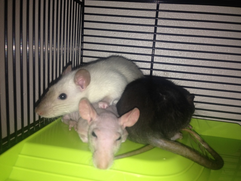 Mes bébés :)  Photo_10