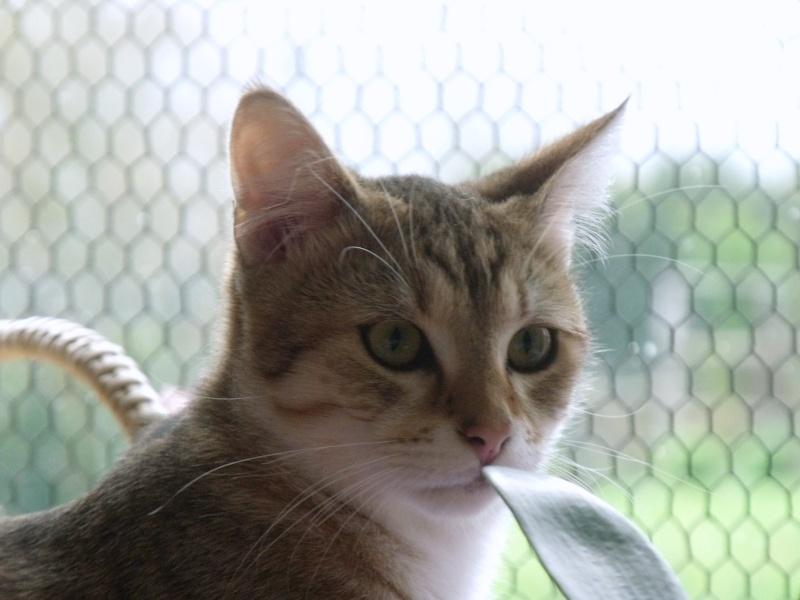 JUNO - tigré clair - (Jedy est adopté) - 05/2014  Dscf8710