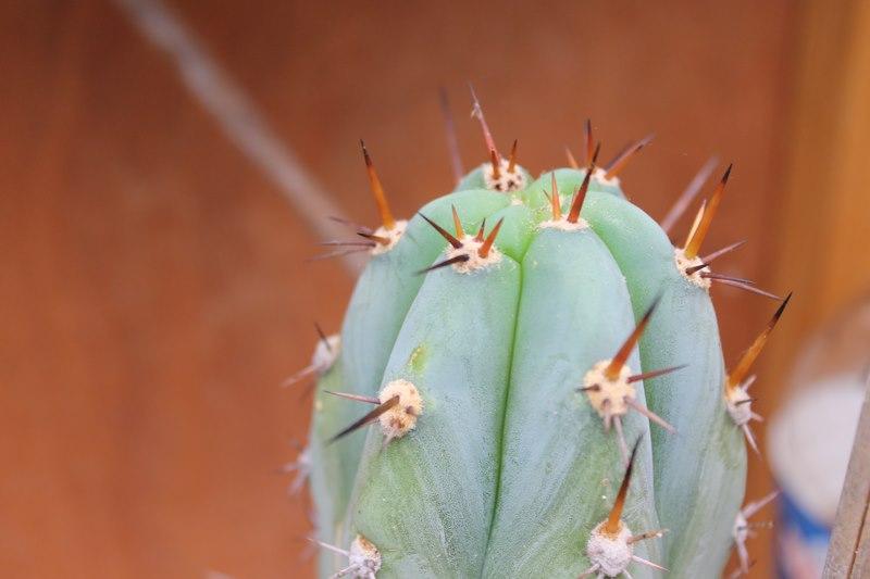Mes cactus de fin Aout 2014! - Page 2 27_aou13