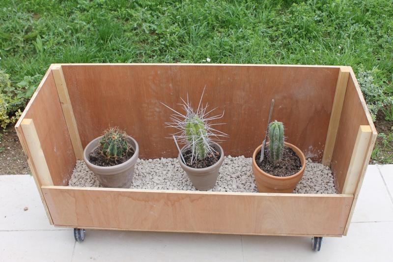 Mes cactus de fin Aout 2014! - Page 2 Modifi12