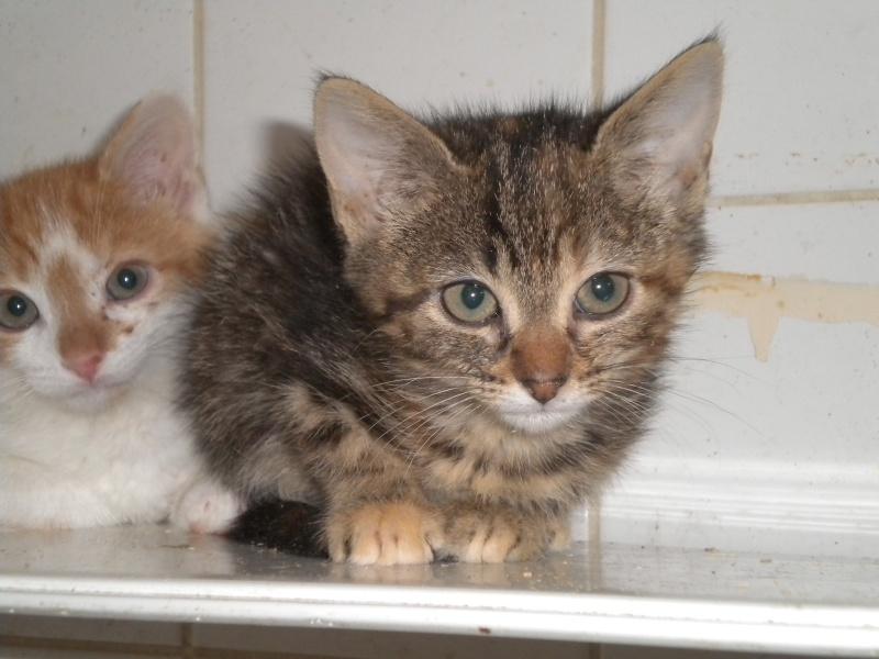 PEPITE (chatte femelle tigrée) Pepite10