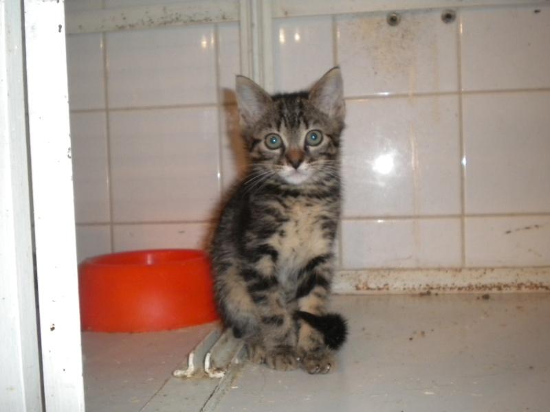 POPSY (chaton mâle tigré foncé) Popsy10