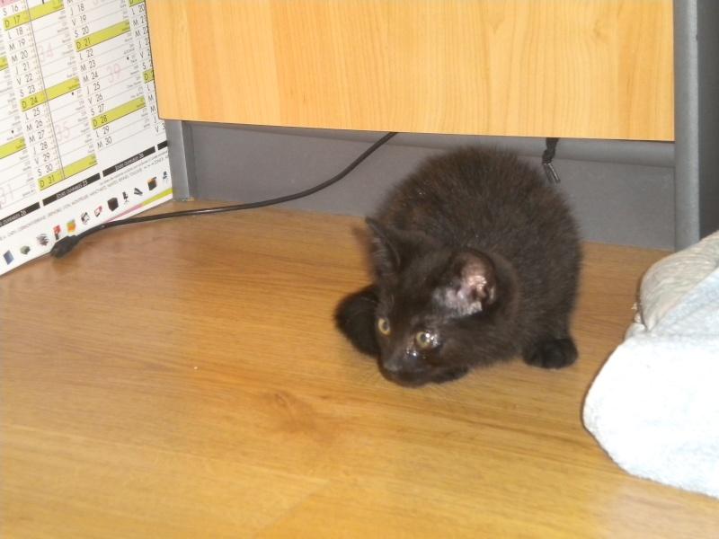 URANUS (chaton mâle noir) Réservé Uranus11