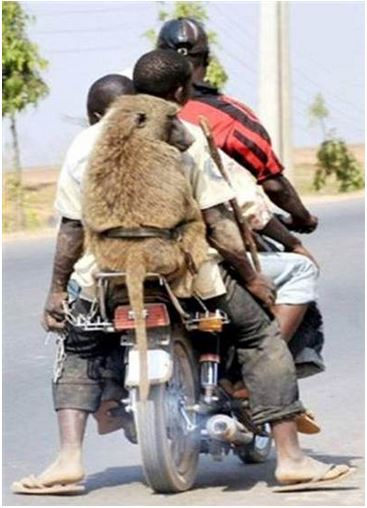 Transports insolites  1010