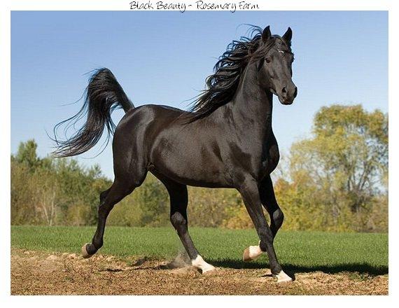 les chevaux.. A_chev11