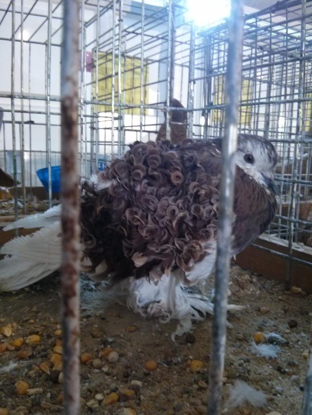 2014 - exposition d'aviculture Foire ST MATTHIEU 27 et 28 Septembre 2014 - Page 2 Img_2322