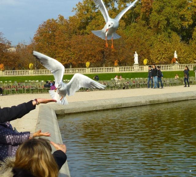 Choses vues dans le jardin du Luxembourg, à Paris - Page 2 Lux_0011