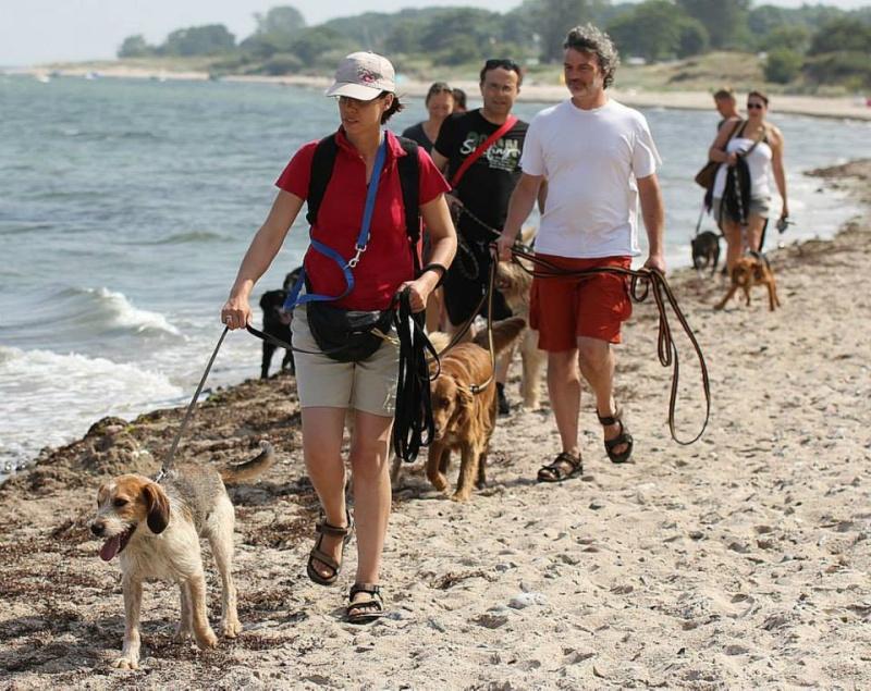 CARLIO parti le 7 septembre avec ses copains Vannie, Aladin,Theo 52187110