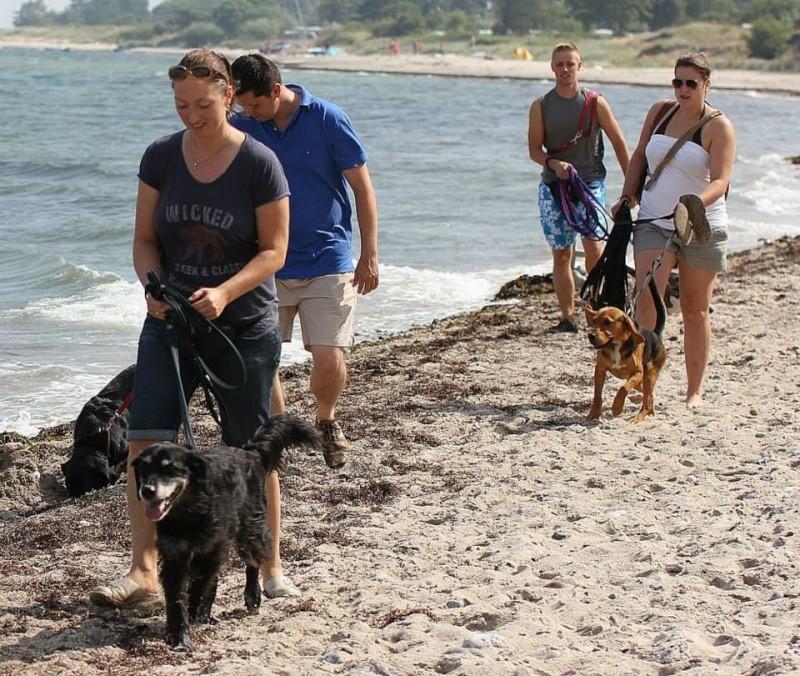 CARLIO parti le 7 septembre avec ses copains Vannie, Aladin,Theo 57717210