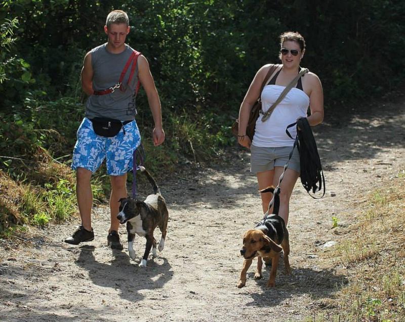 CARLIO parti le 7 septembre avec ses copains Vannie, Aladin,Theo 99687910