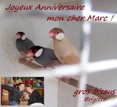 Joyeux Anniversaire Marc ! Marc-310