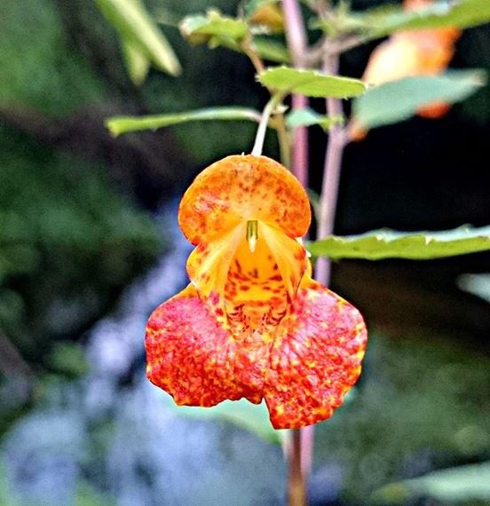 Wildblumen ( Sammelthread) - Seite 6 Blyte_11