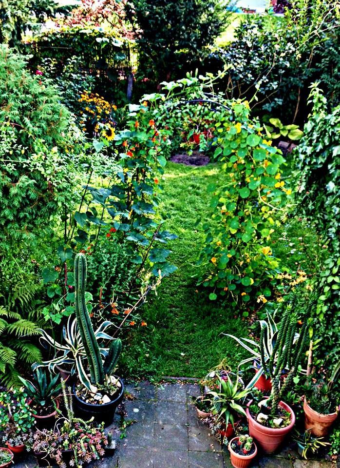 Begleitpflanzen der Kakteen in Haus und Garten - Seite 22 Garten10