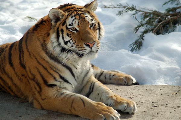 La photo du dimanche - Page 39 Zoo_de12