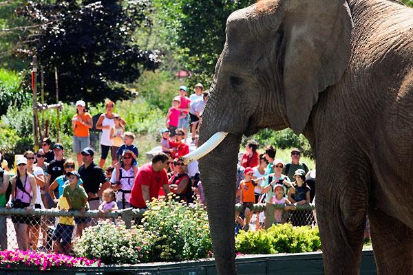 La photo du dimanche - Page 39 Zoo_de14