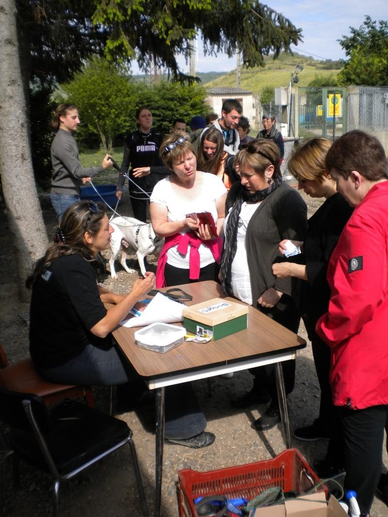 Rando chiens le 1 er juin départ du refuge Dscn0616
