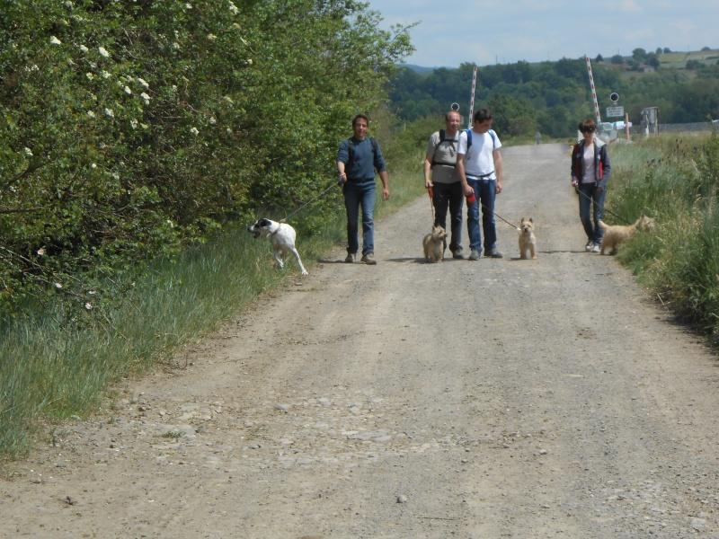 Rando chiens le 1 er juin départ du refuge Rando_14