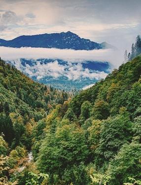 [ Riverside ] Forest10