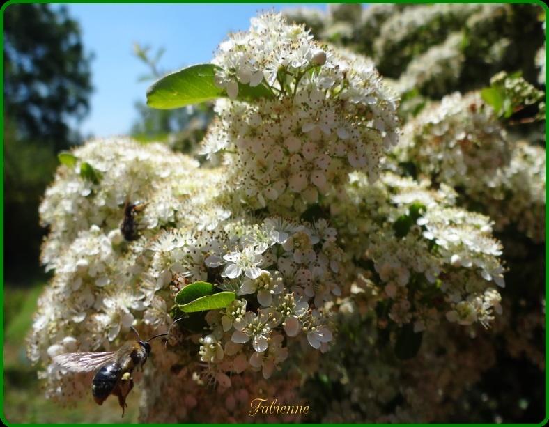 Un petit coin fleuri en BRETAGNE ... 08ipa210