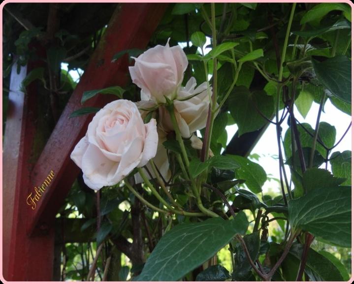 Un petit coin fleuri en BRETAGNE ... Bo1bwb10