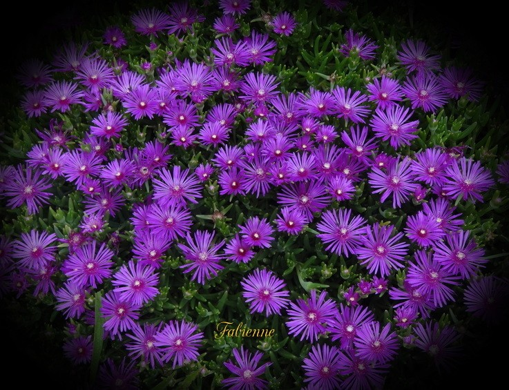 Un petit coin fleuri en BRETAGNE ... Dhn55e10
