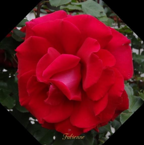 Un petit coin fleuri en BRETAGNE ... Go6abk10