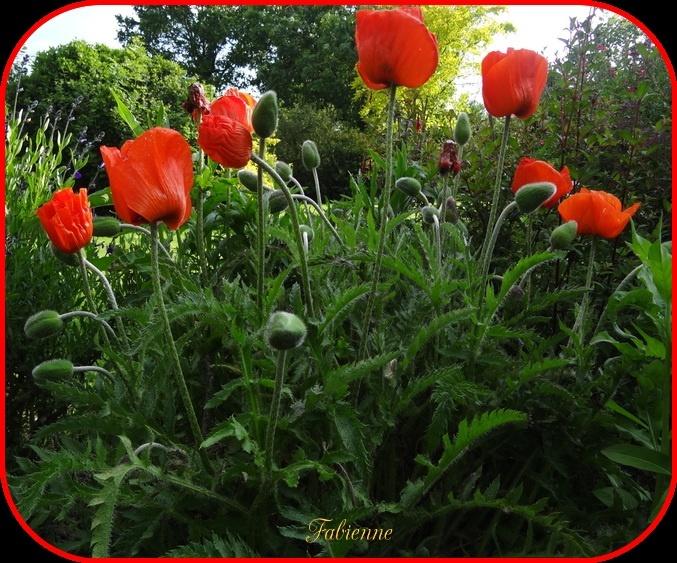 Un petit coin fleuri en BRETAGNE ... Gzz5u910