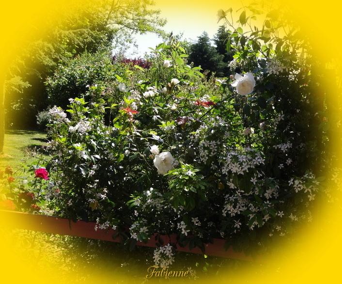 Un petit coin fleuri en BRETAGNE ... Isgqlv10